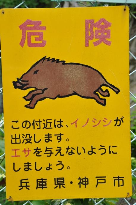 100606 神戸フィエスタ19